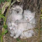 3 Dangerous Cats